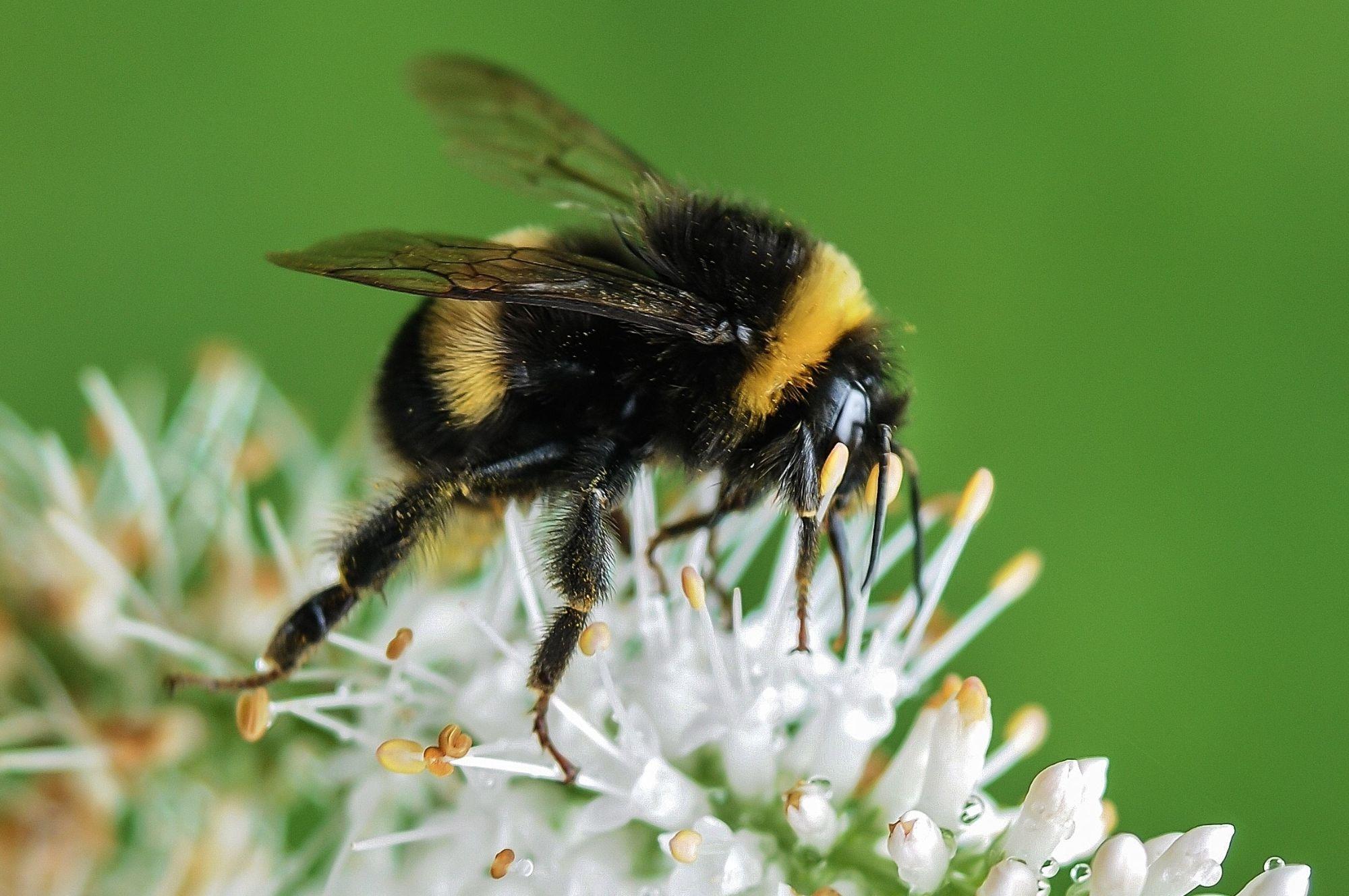 Quando un'ape assume un ruolo importante per noi e per il nostro pianeta!